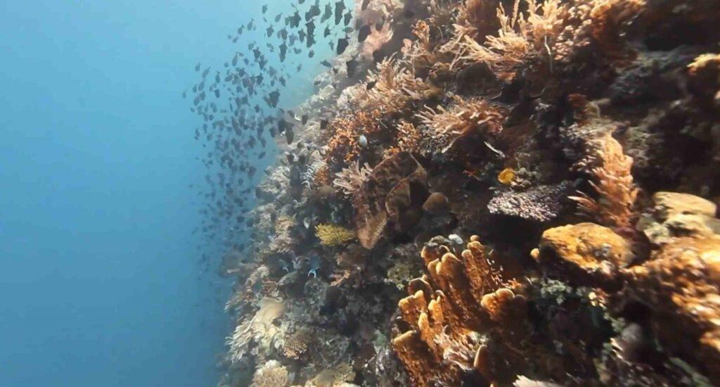 Wakatobi Islands Best Beaches 27